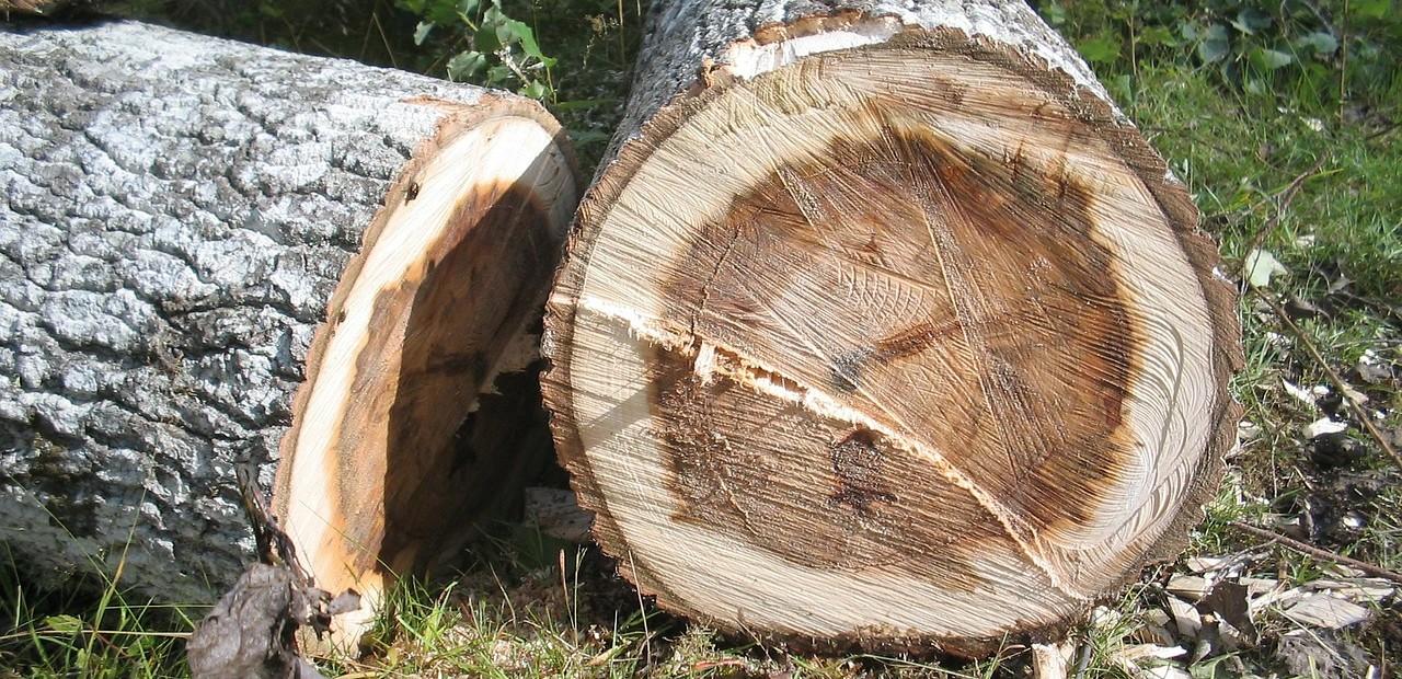 Trädfällning Täby