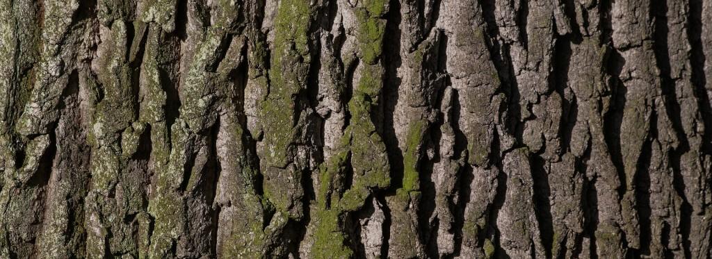 trädfällning vaxholm