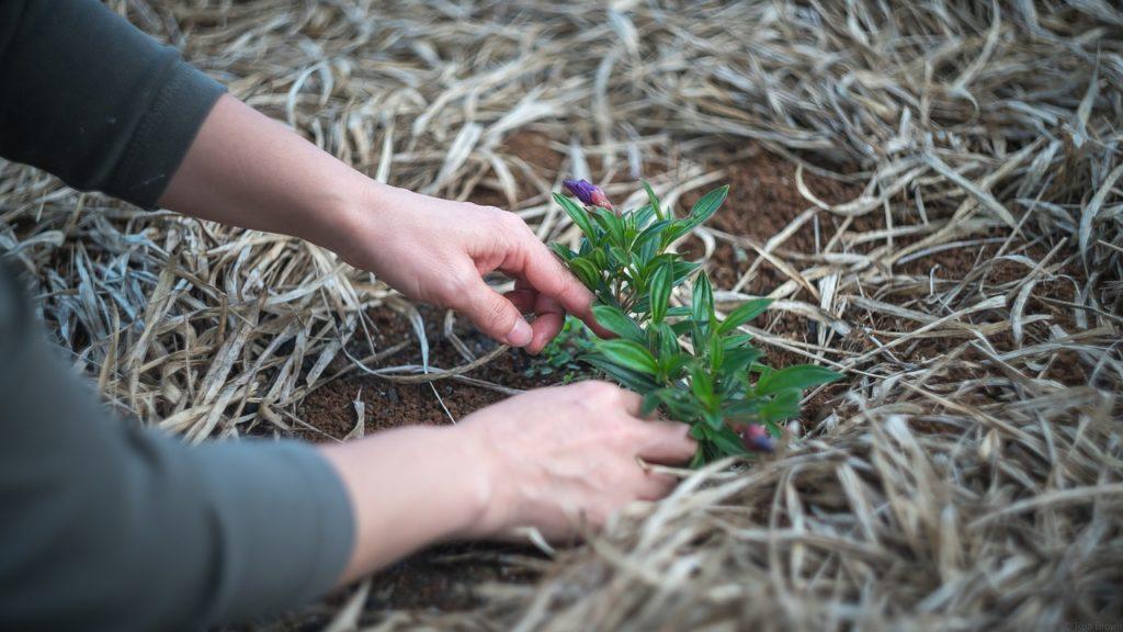 Effektiva trädgardsanläggningar
